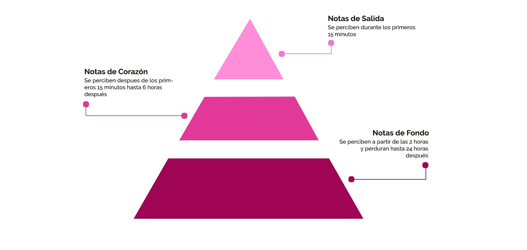 Qué es la pirámide olfativa y cómo utilizarla para elegir un perfume